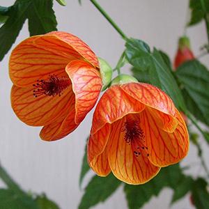 Семена цветов Купить семена цветов в Минске однолетних